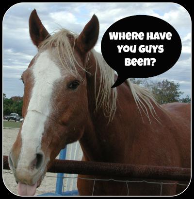 wpid-horse_frame-2013-01-10-10-34.jpg